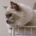 2013_03_13_cat