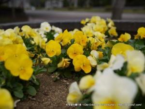 2013_03_17_flower-004