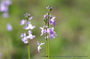 2013_04_13_flower