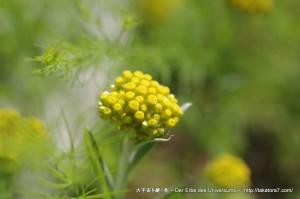 2013_04_28_flower-003