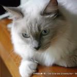 2013_08_25_cat-001