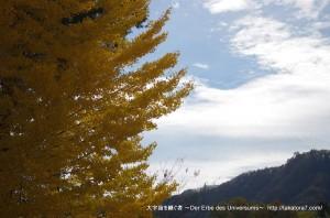 2014_11_08_yokoya-021