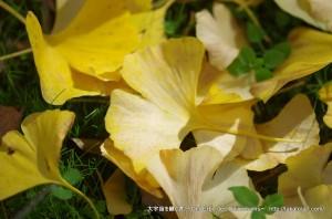 2014_11_08_yokoya-032